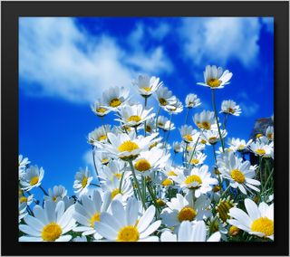 Обои на телефон весна, цветы, синие, ромашки, природа, облака, небо, время, белые