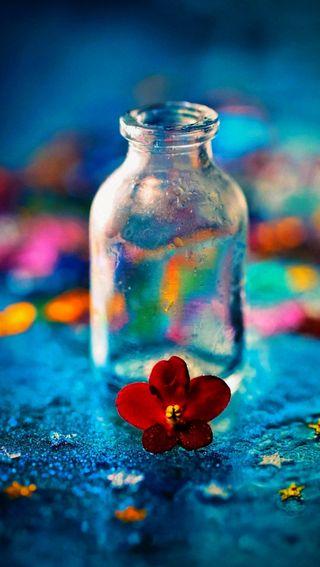 Обои на телефон бутылка, цветы, цветные, красые, абстрактные, red flowers, red flower