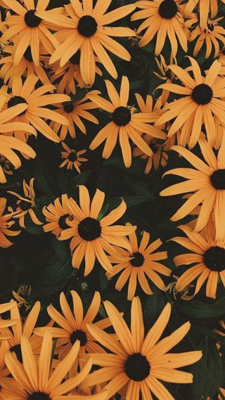 Обои на телефон цветы, rosas, hd, girasoles, girasol, fondo