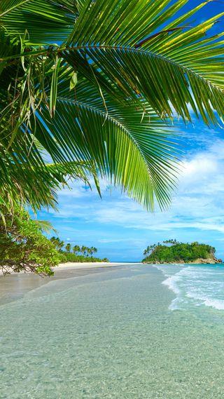 Обои на телефон тропические, природа, пляж, вода, palmy
