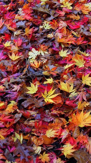 Обои на телефон сезон, осень, время, листья, дерево, fall time