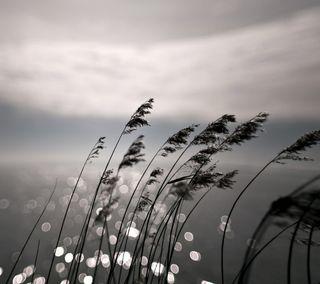 Обои на телефон трава, природа, ночь, боке