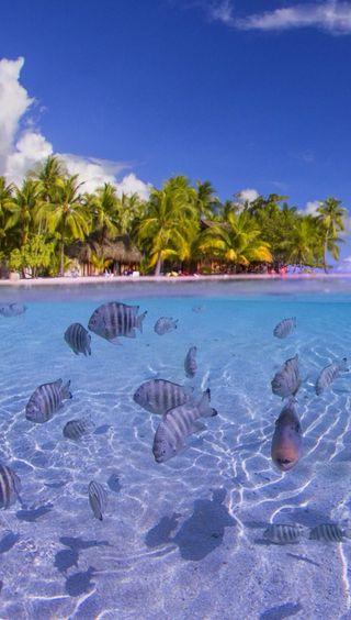 Обои на телефон подводные, рыба, пальмы, море, лето