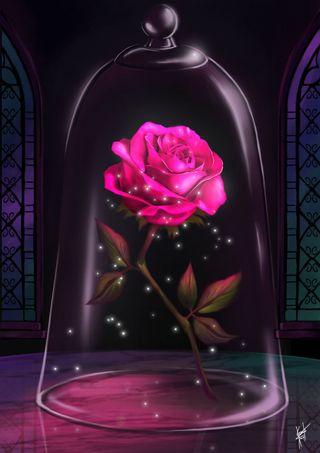 Обои на телефон красота, розы, розовые