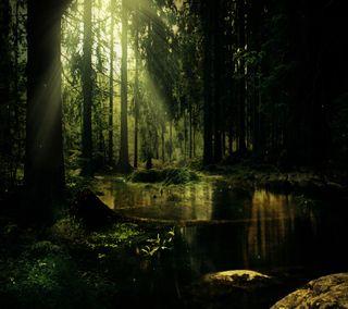 Обои на телефон джунгли, солнце, растения, пруд, лес, дерево, вода, swamp