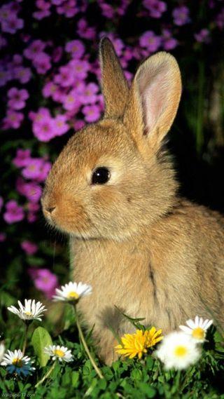 Обои на телефон кролики, питомцы, кролик, животные