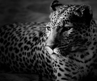 Обои на телефон леопард, тигр, лев, животные
