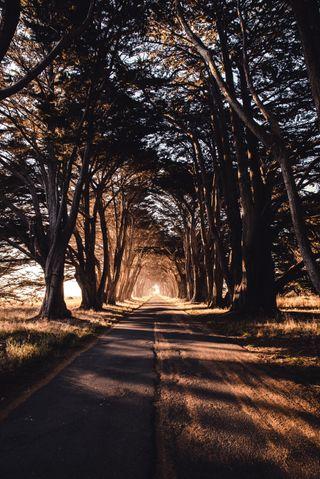 Обои на телефон сумерки, путь, природа, лес