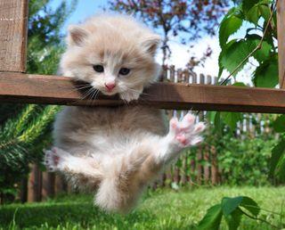Обои на телефон кошки, милые, котята
