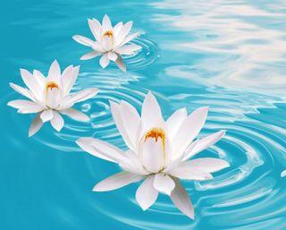 Обои на телефон релакс, цветы, природа, настроение, макро, дзен, вода, боке