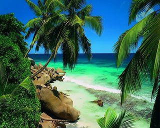 Обои на телефон берег, тропические, пляж, пальмы
