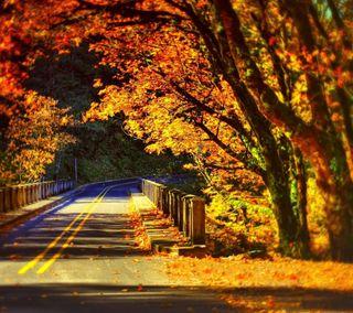 Обои на телефон путь, природа, осень, дорога, деревья, autumn road