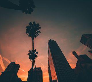 Обои на телефон пальмы, здания, небо, закат, дерево, городской пейзаж
