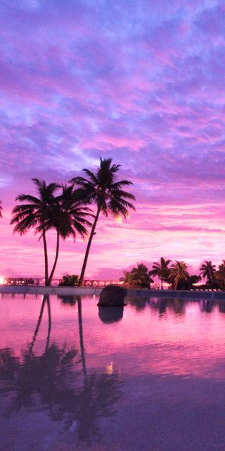 Обои на телефон пляж, розовые, пейзаж, пальмы, закат