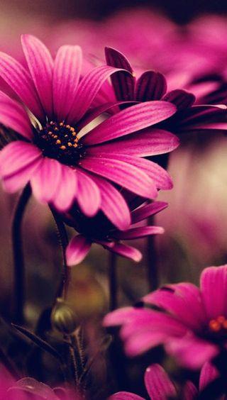 Обои на телефон природа, цветы, макро