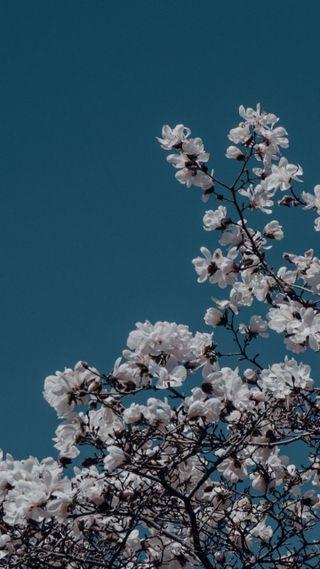 Обои на телефон эстетические, цветы, синие