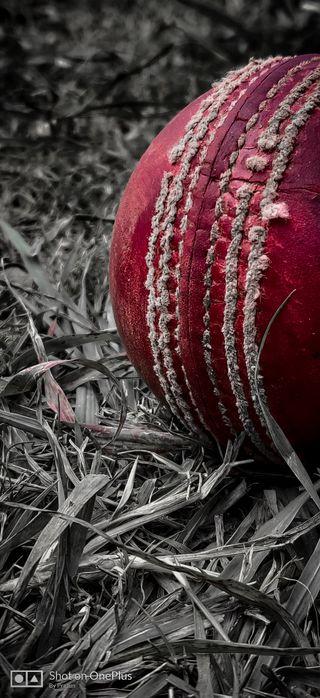 Обои на телефон крикет, мяч