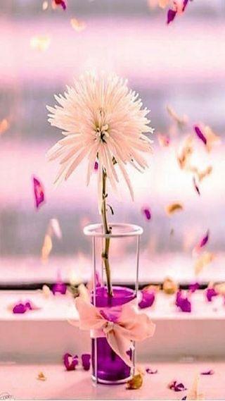 Обои на телефон лепестки, цветы, dahlia