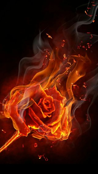 Обои на телефон розы, природа, огонь, дым, горящий, гореть, burning rose