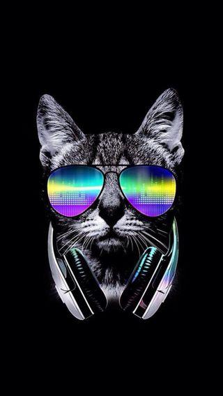 Обои на телефон сахар, череп, планета, очки, музыка, крутые, кошки, кот, диджей, dj
