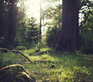 Обои на телефон дерево, природа, на улице, лес, zarborday, earthporn, dappled