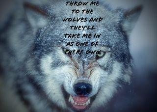 Обои на телефон цитата, волк, wolf quote