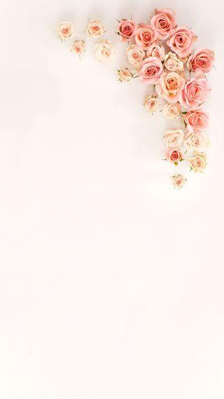 Обои на телефон пастельные, шаблон, цветы, цветочные, розы, розовые