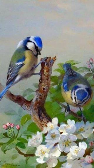 Обои на телефон птицы, два, белые, two birds