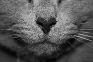 Обои на телефон черно белые, природа, лицо, кошки, животные, cat face