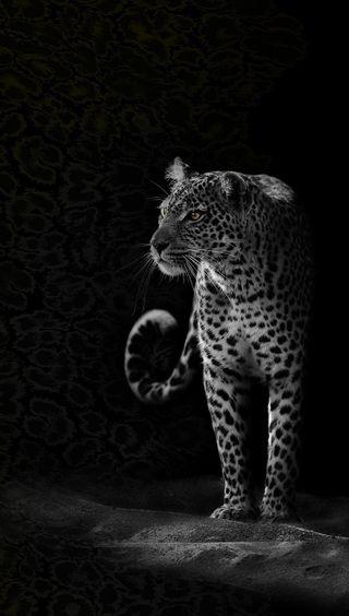 Обои на телефон ягуар, опасные, эпл, темные, приятные, природа, питомцы, кошки, животные, бразилия, apple