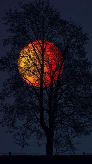 Обои на телефон дерево, природа, ночь, красота, закат