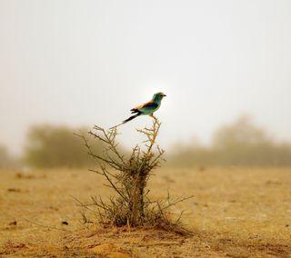 Обои на телефон пустыня, птицы, животные, bird in the desert