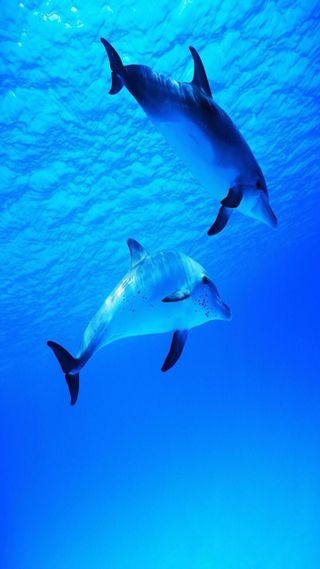 Обои на телефон подводные, приятные, прекрасные, милые, дельфины, взгляд, dolphins underwater