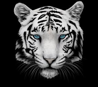 Обои на телефон голова, тигр, белые, whiskers, muzzle