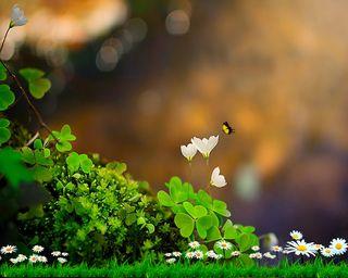 Обои на телефон трава, цветные, приятные, природа, новый, естественные, бабочки, hd, clovers