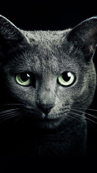 Обои на телефон коты, кошки, кот, gatos