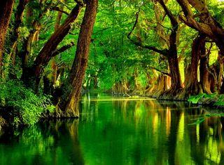Обои на телефон река, природа, прекрасные, зеленые, деревья, green river, green nature river trees