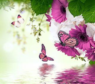 Обои на телефон цветочные, цветы, фиолетовые, отражение, вода, бабочки, gerbera
