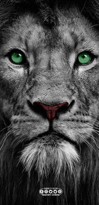 Обои на телефон land, lioness, one, piece, белые, лев, король, конг