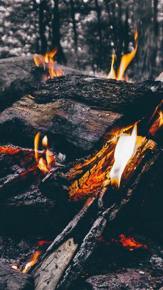 Обои на телефон поход, дерево, огонь, лес, on