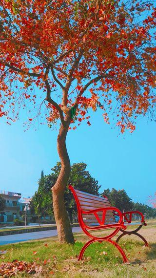 Обои на телефон цвета, романтика, осень, autumn colours