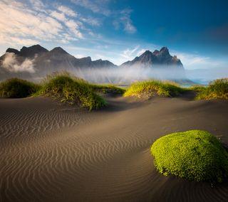 Обои на телефон растения, песок, горы, sandy mountains, iceland