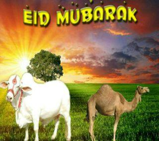 Обои на телефон святой, повод, мубарак, muslims, holy occasion, eid ul azha mubarak, eid ul adha mubarak, bakra eid