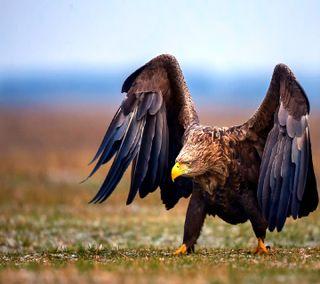 Обои на телефон орел, eagle------------, ------------