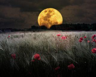 Обои на телефон copses, meadows, темные, ночь, луна, поле, боке, тень