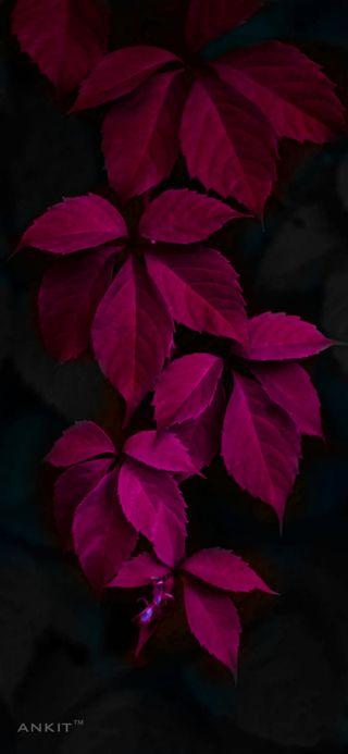 Обои на телефон листья, цветы, розовые, природа, дерево, planta