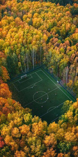 Обои на телефон россия, футбол, стадион, спорт, осень, деревья, views, pitch, moscow, forrest