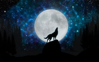 Обои на телефон тень, ночь, небо, луна, лес, звезды, звезда, галактика, волк, howling wolf, galaxy