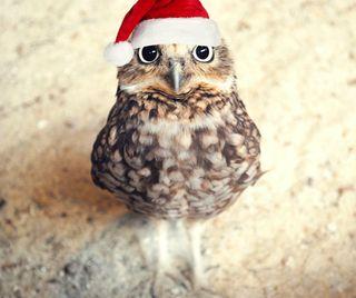 Обои на телефон каникулы, сова, рождество