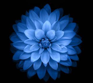 Обои на телефон лотус, синие, dws, dhm, blue lotus